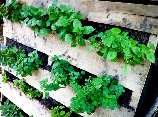 Detalhe jardim vertical - Fiesta Farms