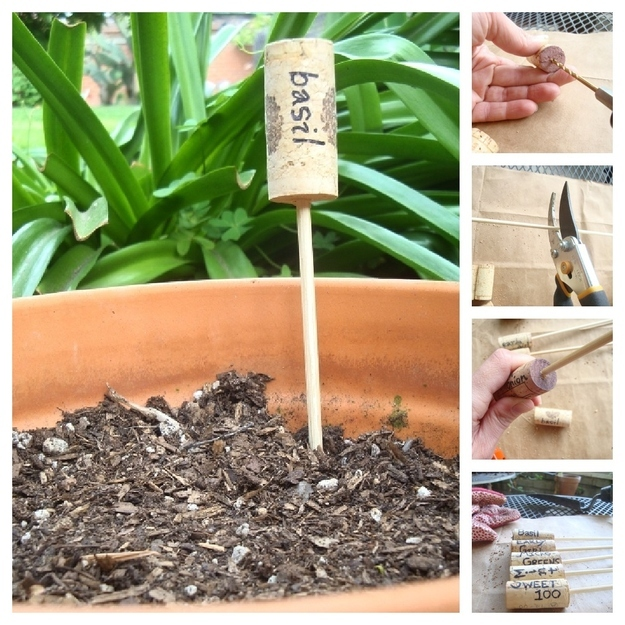identifique plantas usando rolhas