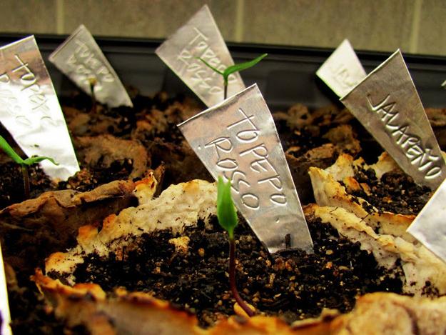 identificador-plantas-chapinha-aluminio