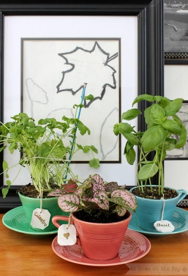 identificador-plantas-etiqueta-sache-cha