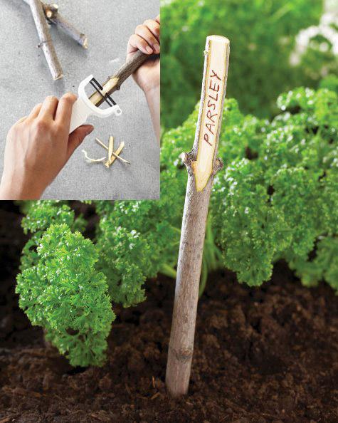 identificador-plantas-galho-madeira