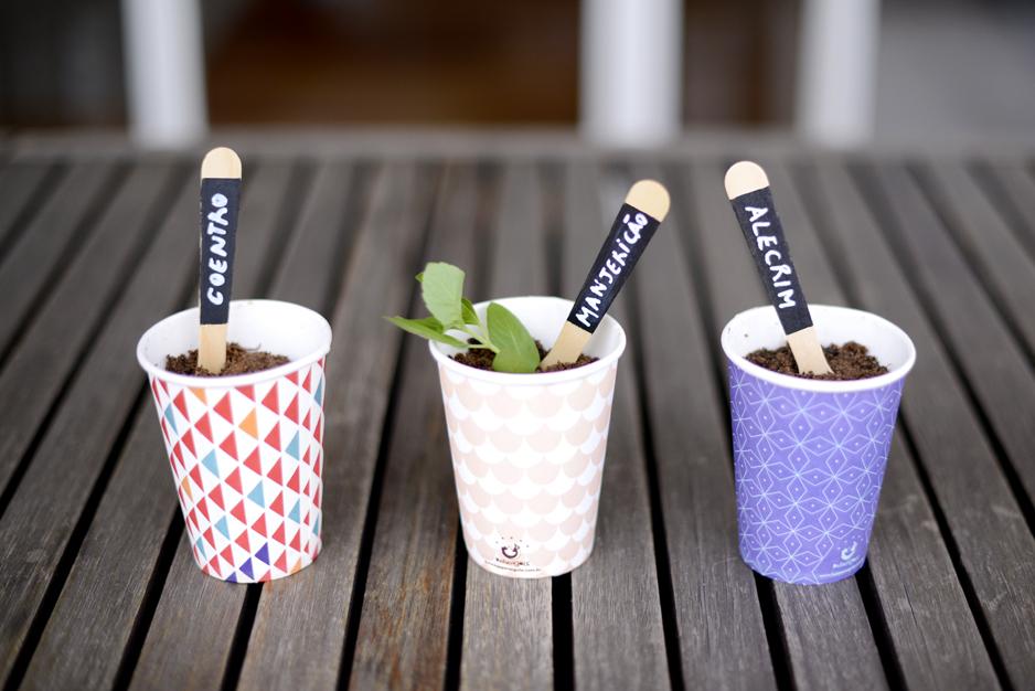 identificador-plantas-garfinho-madeira