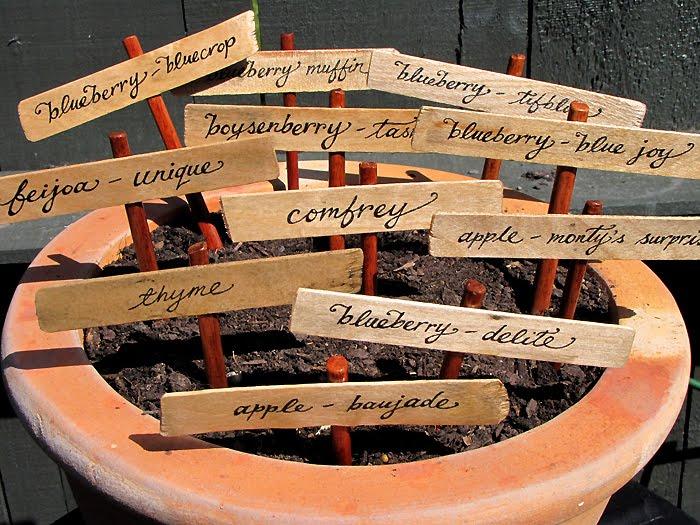 identificador-plantas-palito-sorvete-horizontal