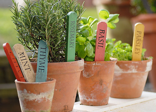 identificador-plantas-palito-sorvete
