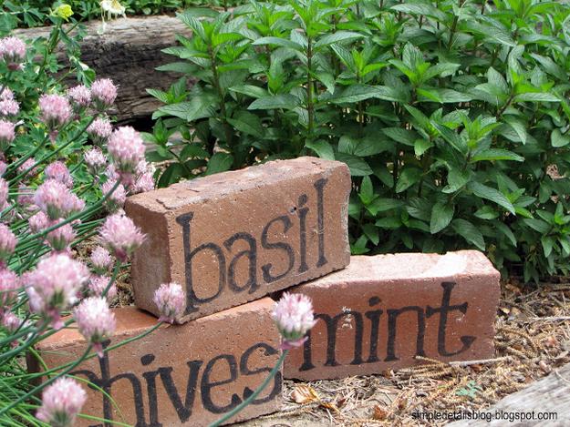 identificador-plantas-tijolo-barro
