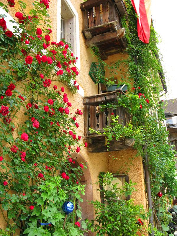 rua_floreiras_muitas_cores_hallstatt_rosas