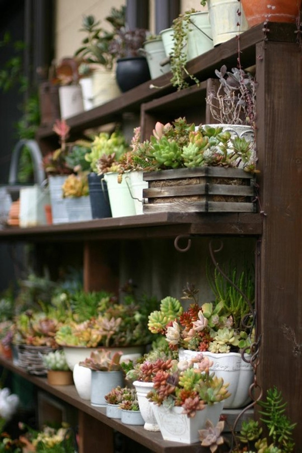 Jardineira de plantas suculentas