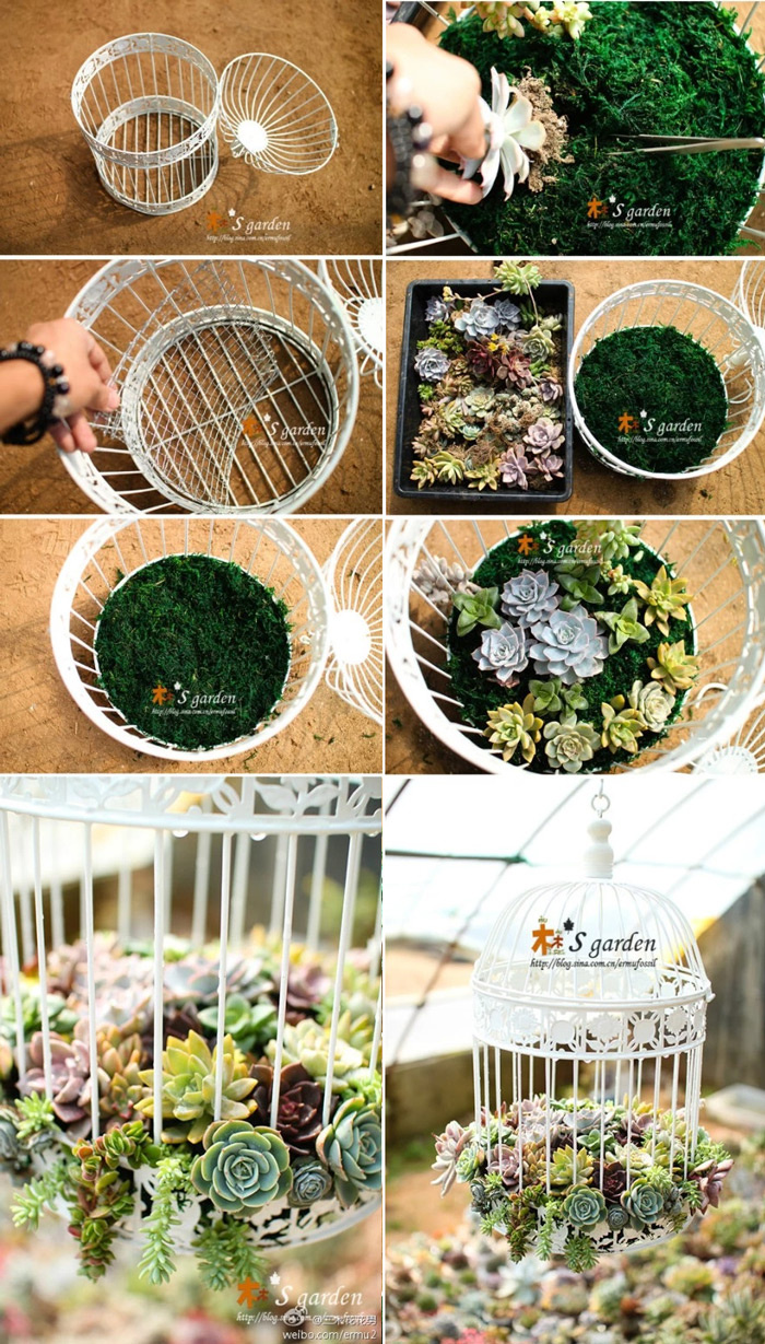 ideias baratas para jardim vertical : ideias baratas para jardim vertical:Mini jardim de suculentas na gaiola – Faça Você Mesmo