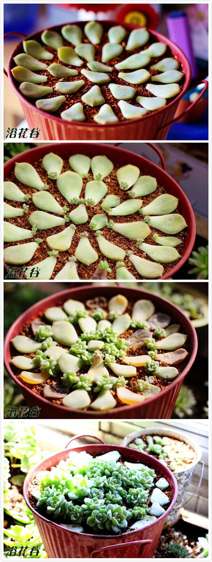 Vaso de plantas suculentas