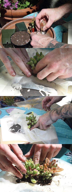 hora de plantar as suculentas